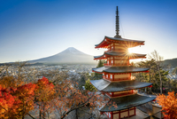Chureito Pagoda with Mount Fuji during autumn season, Fujiyoshida, Yamanashi prefecture, Japan 20088050019| 写真素材・ストックフォト・画像・イラスト素材|アマナイメージズ