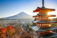 Chureito Pagoda with Mount Fuji during autumn season, Fujiyoshida, Yamanashi prefecture, Japan 20088050021| 写真素材・ストックフォト・画像・イラスト素材|アマナイメージズ