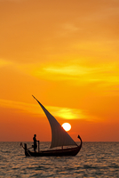 Maldives, Rasdhoo Atoll, Kuramathi Island. A Maldivian man sails a traditional Dhoni at sunset. MR. 20088054287| 写真素材・ストックフォト・画像・イラスト素材|アマナイメージズ