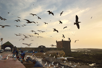 Fishermen and seagulls at twilight, in front of the 18th century South Bastion, Skala du Port. A Unesco World Heritage Site, Ess 20088058379| 写真素材・ストックフォト・画像・イラスト素材|アマナイメージズ