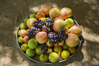 Niger, Agadez, Sub-Sahara, Air Mountains, Timia.  A bowl of freshly picked fruit at Timia oasis.  The place is renowned for the 20088060796| 写真素材・ストックフォト・画像・イラスト素材|アマナイメージズ