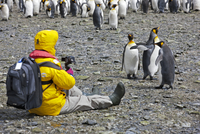 A visitor photographing King penguins at Right Whale Bay near the northeast tip of South Georgia. 20088071628| 写真素材・ストックフォト・画像・イラスト素材|アマナイメージズ