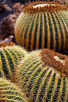 Detail of a Cactus in Lanzarote, Spain 20088073642| 写真素材・ストックフォト・画像・イラスト素材|アマナイメージズ