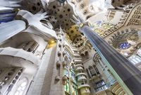 Barcelona, Spain. Sagrada Familia interior, building ideated by modernist architect Antonio Gaudi 20088075532| 写真素材・ストックフォト・画像・イラスト素材|アマナイメージズ