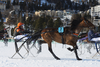 Europe, Switzerland, Graubunden, Engadine, St Moritz in winter, White Turf International Horse Race, Trap event 20088077892| 写真素材・ストックフォト・画像・イラスト素材|アマナイメージズ