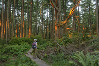 Woman admiring the forest at Cape Alava, Olympic National Park, Clallam County, Washington, USA, MR 20088088908| 写真素材・ストックフォト・画像・イラスト素材|アマナイメージズ