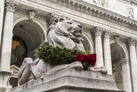 Marble lion sculpture adorned with Christmas decorations, The New York Public Library, Manhattan, New York, USA