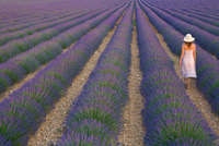Young Woman in Lavender Field near Valensole, Provence-Alpes-Cote d'azur, France, MR 20088095265| 写真素材・ストックフォト・画像・イラスト素材|アマナイメージズ