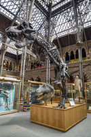 Europe,United Kingdom, England, Oxfordshire, Oxford, Natural History Museum 20088097656| 写真素材・ストックフォト・画像・イラスト素材|アマナイメージズ