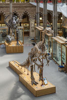Europe,United Kingdom, England, Oxfordshire, Oxford, Natural History Museum 20088097659| 写真素材・ストックフォト・画像・イラスト素材|アマナイメージズ