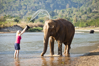 A girl washing an elephant at the Elephant Nature Park near Chiang Mai. 20089000309| 写真素材・ストックフォト・画像・イラスト素材|アマナイメージズ