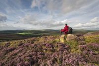 A walker surrounded by heather sat looking towards Shutlinsloe.