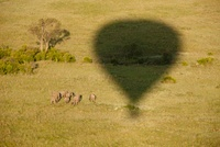 African Elephant herd photographed from a hot air balloon, M 22206003248| 写真素材・ストックフォト・画像・イラスト素材|アマナイメージズ
