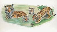 Tiger and its cubs in water 22907003000| 写真素材・ストックフォト・画像・イラスト素材|アマナイメージズ