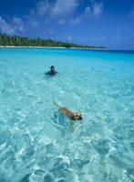 泳ぐ犬と人 25356001697| 写真素材・ストックフォト・画像・イラスト素材|アマナイメージズ