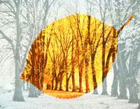 並木道と一枚の黄葉のイメージ 25534000487| 写真素材・ストックフォト・画像・イラスト素材|アマナイメージズ