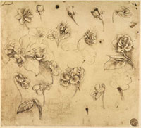Study of flowers,pen drawing on yellowish paper,with signs 26144000314| 写真素材・ストックフォト・画像・イラスト素材|アマナイメージズ