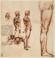 Study of the proportions of the human body,sanguine and pen 26144000391| 写真素材・ストックフォト・画像・イラスト素材|アマナイメージズ