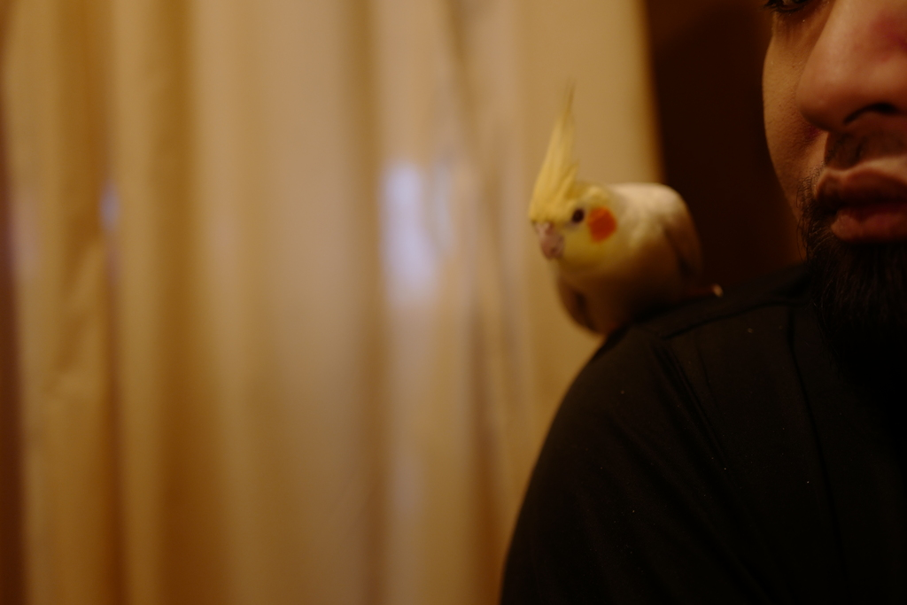 One day, Yuzu-san was playing on my sholder. Though it's out of focus, I don't care.