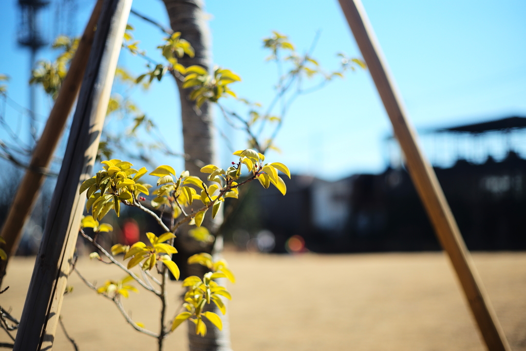 Spring is coming.