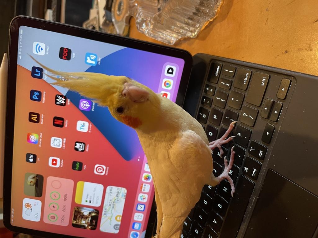 Yuzu-san was walking on the keyboard of my iPad.