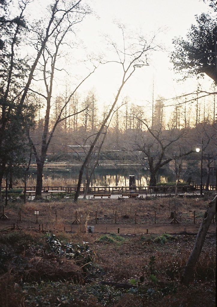 Inokashira Park. There was almost nobody there.