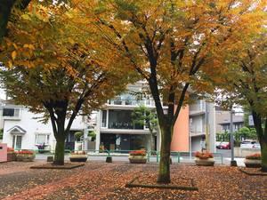 オフィス前が公園です。会議をしながら、四季折々の風景を眺めることができます。