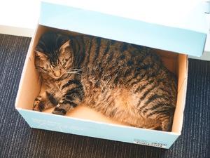 オフィスには猫が2匹います♪猫をモフモフしながら仕事ができます♪