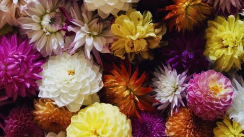 花の種(10袋)