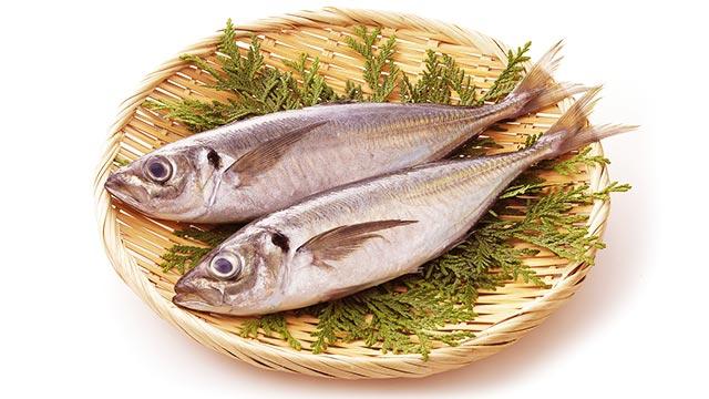 DHAなどの不飽和脂肪酸を豊富に含んだ「あじ」の特徴や調理法