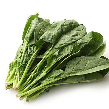 緑黄色野菜の中でもきわめて栄養価の高い野菜「ほうれん草」