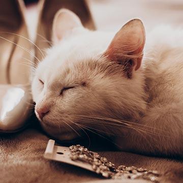 お昼過ぎに眠くなるのはなぜ?居眠りのメカニズムについて