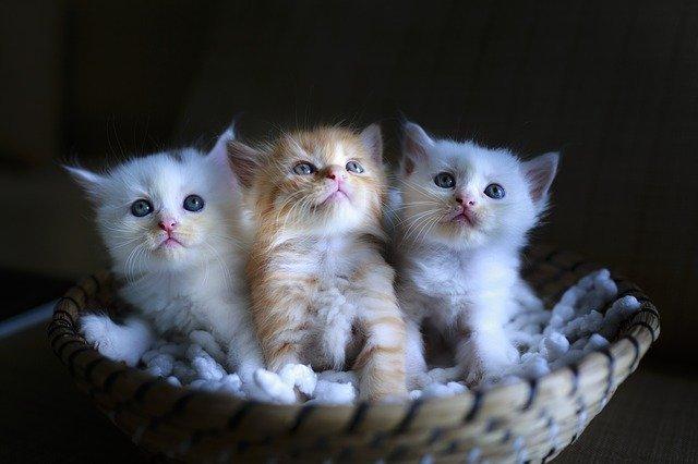 子猫キャラクター