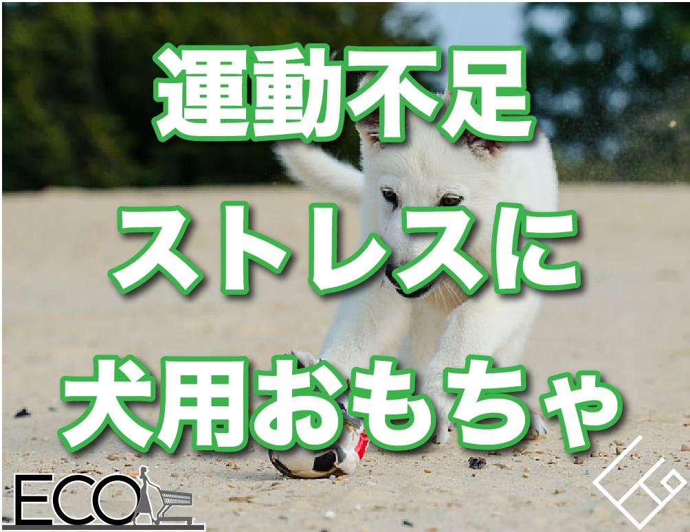 犬用おもちゃおすすめ10選【あそびながら学べる】