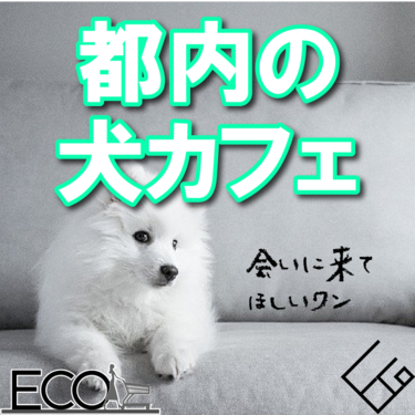 都内の犬カフェおすすめ10選【ペット/東京】