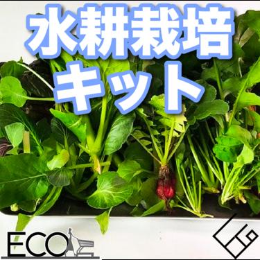 水耕栽培キットおすすめ22選【トマト/お花も/自宅でおしゃれにかわいく楽しく】