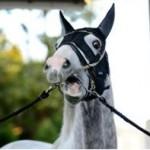 【疑問】強い馬に関してはいくらでもエピソードあるし良いんだけどハルウララちゃんはどうするんだろうね???