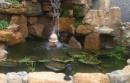 花園池~水球滾動~扭轉乾坤,福運一直轉進來!