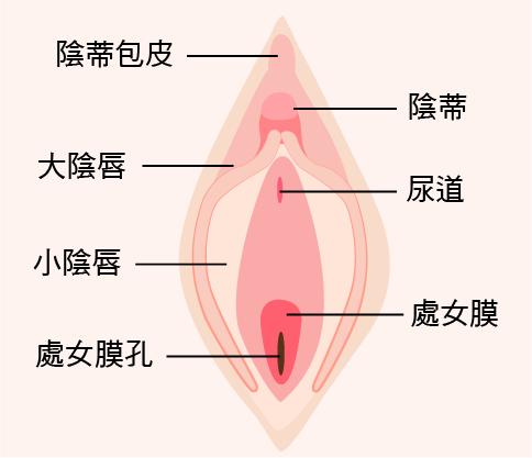 陰唇手術-36.png