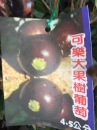 可樂大果樹葡萄