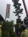 各種綠化樹木:層型羅漢松