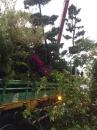 各種類綠化樹木,灌木,四季草