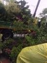 各種類綠化樹木,灌木,花卉