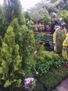 類綠化樹木