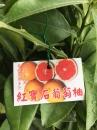 紅寶石葡萄柚