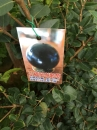 四季福岡樹葡萄