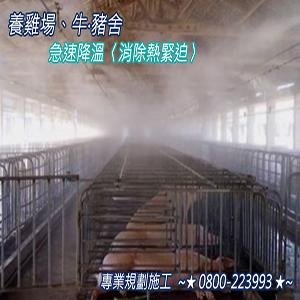 養雞場、牛‧豬舍急速降溫〈消除熱緊迫〉消毒、洗淨、除臭 0800-223993-10.jpg