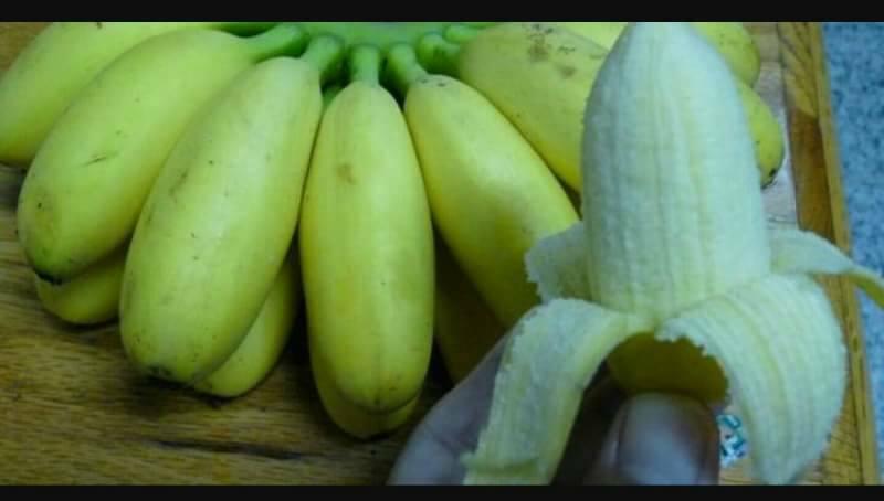 蛋蕉.jpg