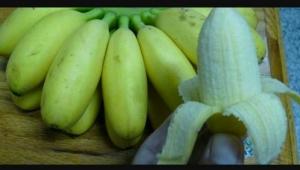 蛋蕉(馬來西亞品系)