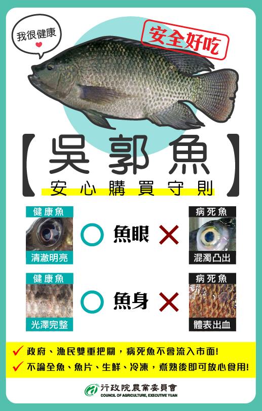 吳郭魚2.jpg